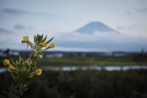 YUGA KURITA Mount Fuji SIGMA DP2 Quattro _P2Q0047 富士には月見草がよく似合う
