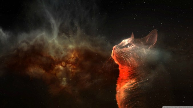 cats_space-wallpaper-1366x768