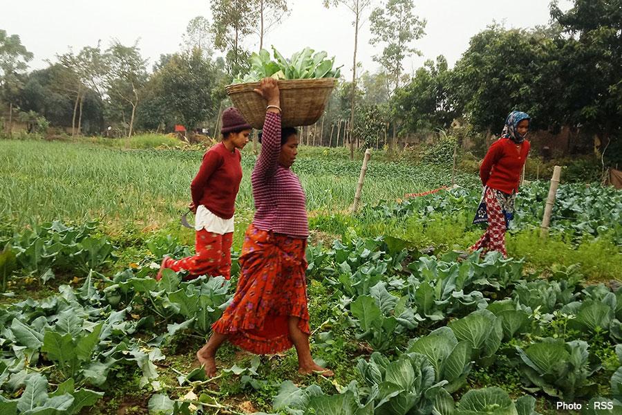 मुग्लानमा रोजगारी गुम्यो, गाउँमा व्यवसाय थालनी