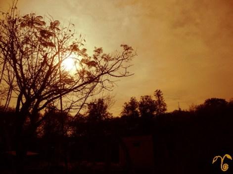 sun_behind_tree