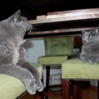 猫でもできるドイツ語講座 パート86