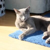 猫でもできるドイツ語講座 パート51