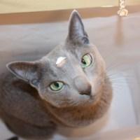 猫でもできるドイツ語講座 パート59