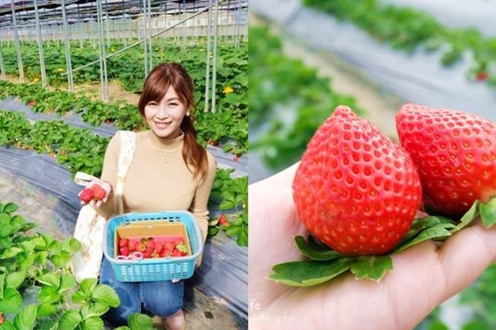 桃園大溪採草莓推薦【323溫室精緻農場】北部採草莓景點×場地超大下雨也能採