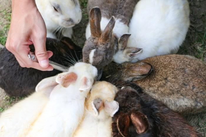 新北美食【TO House兔子庭園餐廳】親子寵物餐廳推薦×八里一日遊