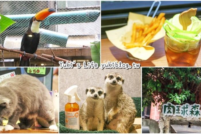 台北美食【肉球森林】 狐獴、大嘴鸟、猫咪咖啡厅(捷运东门站/捷运美食)