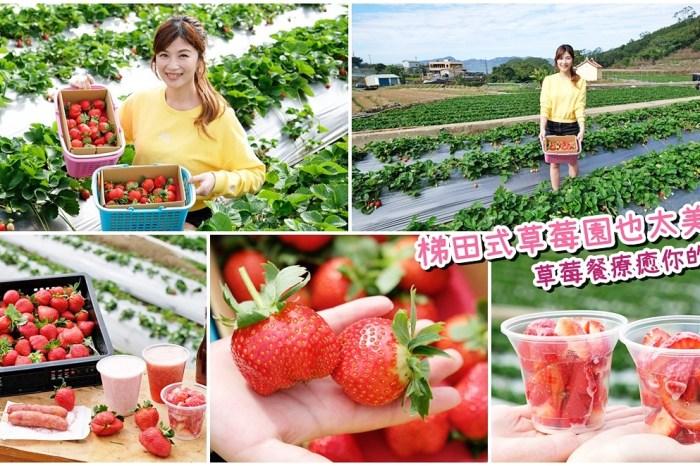 大湖草莓園推薦「莓李帽」苗栗馬拉邦山梯田式草莓園也太美!草莓餐療癒你的心