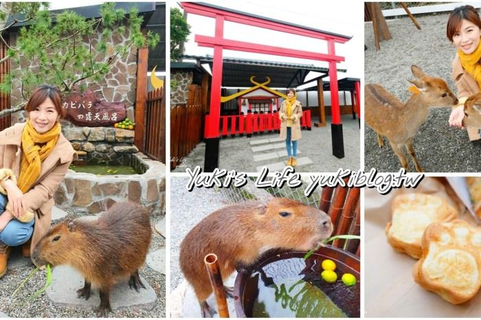 宜蘭親子景點【張美阿嬤農場】水豚君互動新登場!餵梅花鹿.三星蔥油餅宜蘭小吃都在這兒