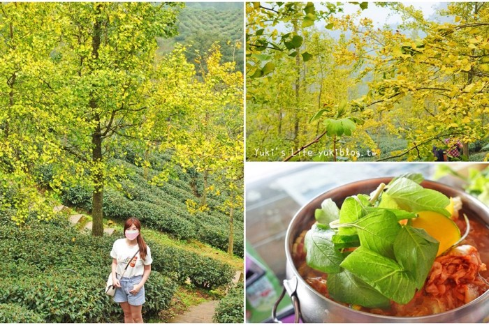 2021大崙山銀杏森林》入秋限定~黃色耀眼森林景色!品嚐特別的銀杏火鍋!
