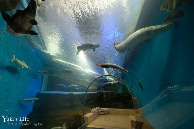 神戶親子景點【須磨海濱水族園】與水豚君一起泡湯×鯊魚魟魚水族館×海豚表演 - Yuki's Life