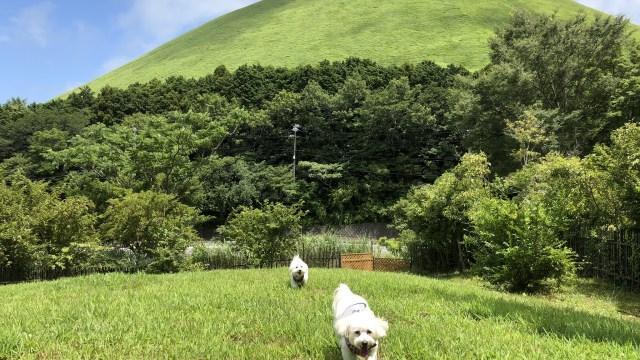 愛犬と行く伊豆おすすめスポット2【大室山ーわんこの森ー城ヶ崎海岸-愛犬の駅】 ドッグラン