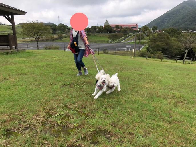 【日光】【大笹牧場】犬と美味しい食事が食べられる牧場 自然