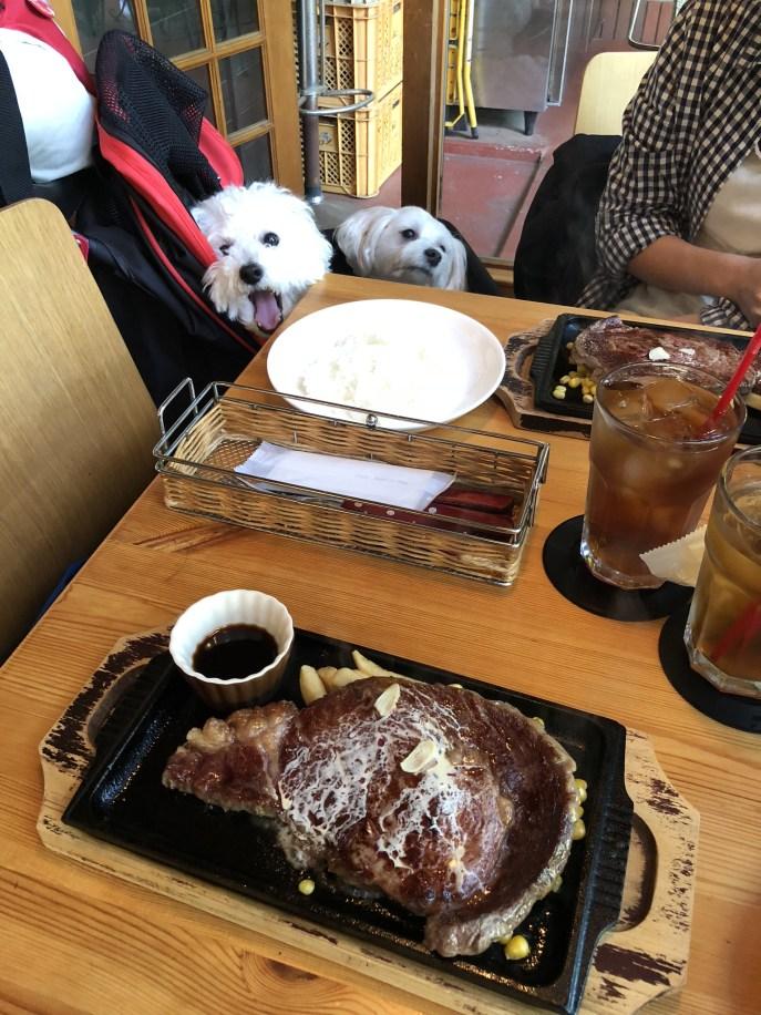 愛犬と行くおすすめ富士旅行3【ムースヒルズバーガー・ハンモックカフェ】 ステーキ