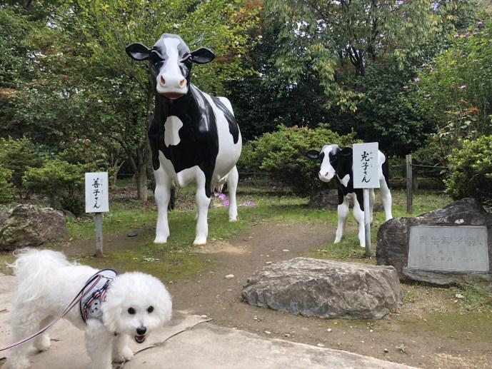 【善光寺】長野県で犬と行ける愛犬家におすすめ観光地 牛