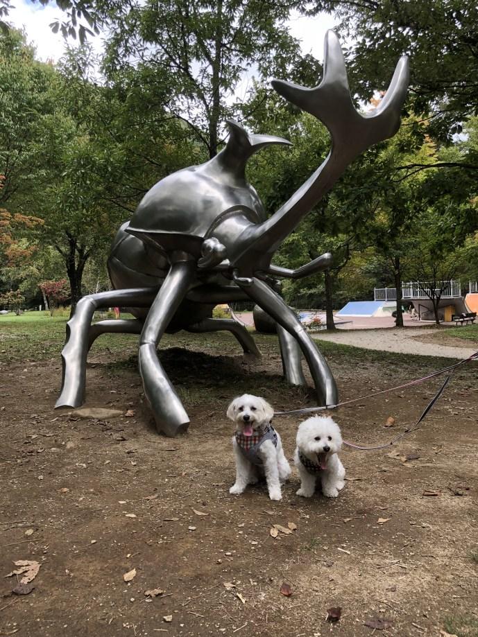 【こまくさ橋】犬と一緒に自然と触れ合える観光施設【すずらんハウス】 かぶとむし