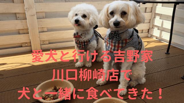 愛犬と行ける吉野家 川口柳崎店で犬と一緒に食べてきた アイキャッチ