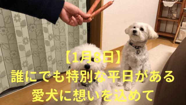 【1月8日】誰にでも特別な平日がある 愛犬に想いを込めて アイキャッチ