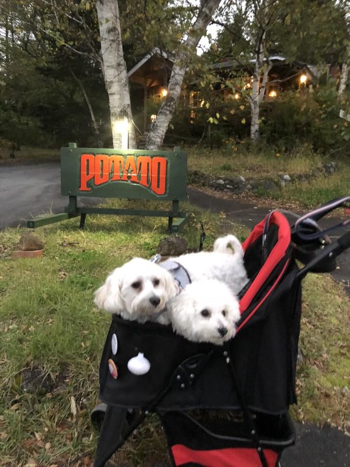 【カントリーハウスクックポテト】犬と一緒に入れるレストラン【白樺湖】 外観