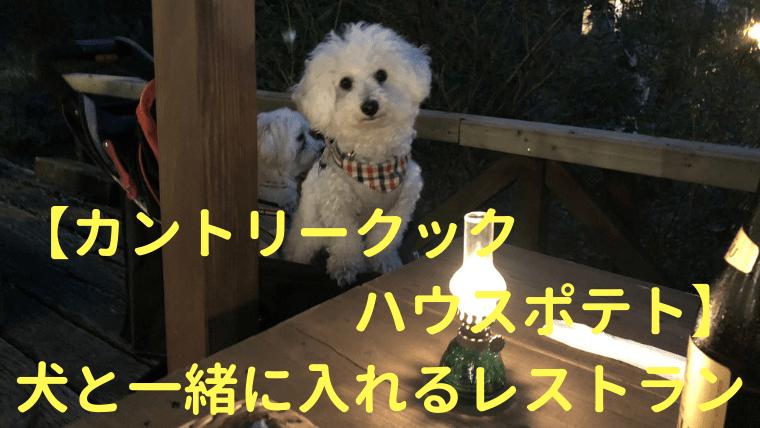 【カントリークックハウスポテト】犬と一緒に入れるレストラン【白樺湖】 アイキャッチ