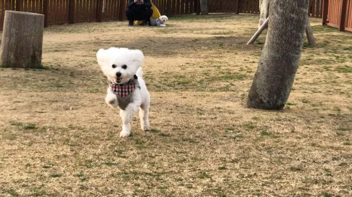 【館山ファミリーパーク】を犬連れで楽しもう!【千葉・房総】 全力ドッグラン