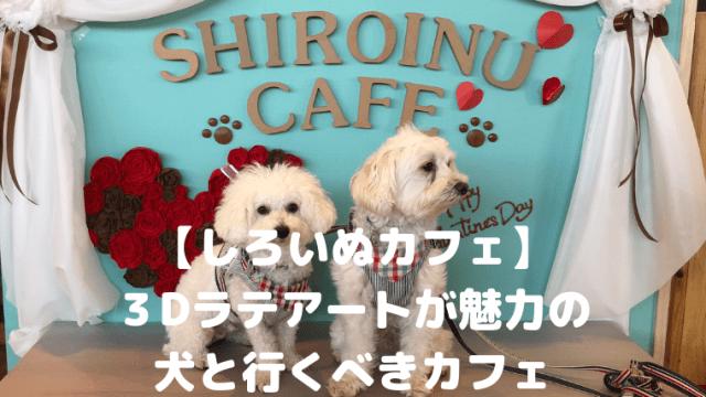 【しろいぬカフェ】 3Dラテアートが魅力の 犬と行くべきカフェ アイキャッチ