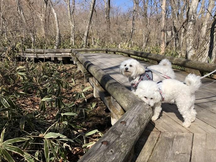 【恋人の聖地】恋人と行くべきつつじ吊橋と那須高原展望台【犬OK】 林道