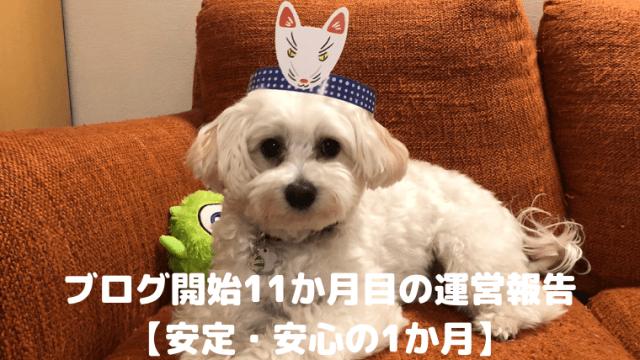 ブログ開始11か月目の運営報告【安定・安心の1か月】 アイキャッチ