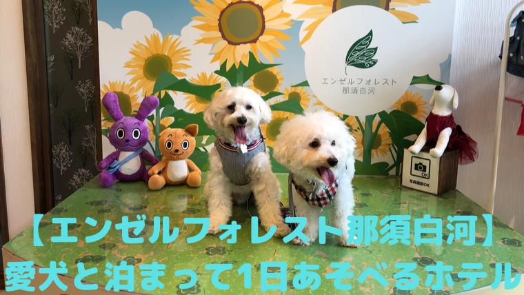 【エンゼルフォレスト那須白河】愛犬と泊まって1日あそべるホテル アイキャッチ
