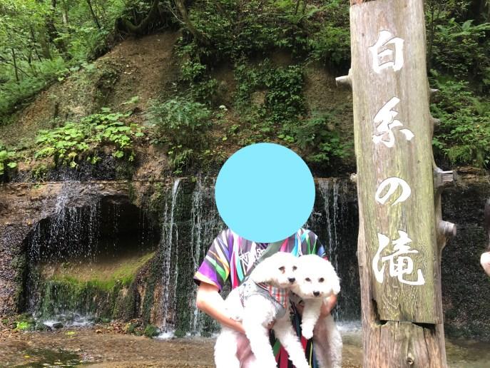 【白糸の滝】軽井沢屈指の観光地を犬と楽しむ方法紹介【軽井沢】 滝