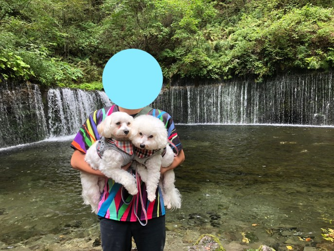 【白糸の滝】軽井沢屈指の観光地を犬と楽しむ方法紹介【軽井沢】 湾曲滝
