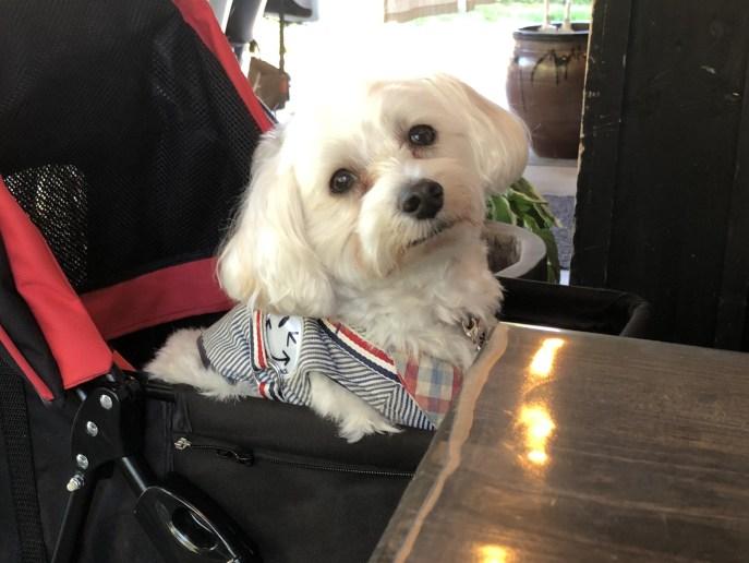 【きりさと】で犬と一緒に 美味しいそばを食べよう 【軽井沢】 雪松