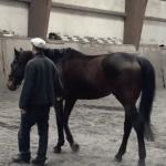 馬を2頭買いました