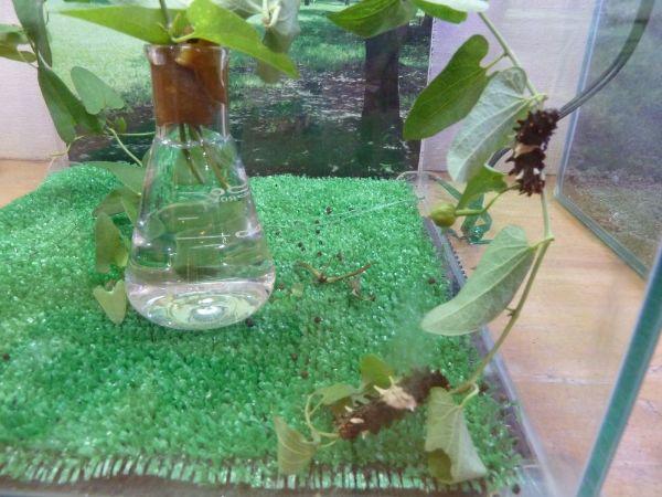 幼虫の展示