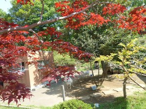 fureai-zoo-yagi