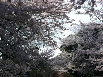 nakae-yuki-hanami-P1290232-031