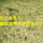 【除草剤】芝生にスギナが生えなくなりました【安全】