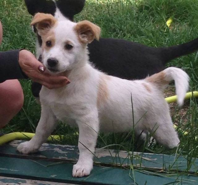 Circle is female, a small-breed puppy.