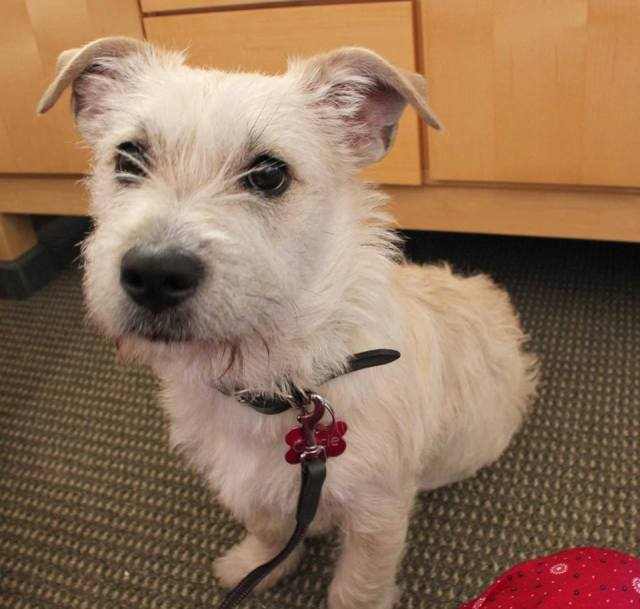 Gracie is a 6-month-old, 20lb terrier cross.