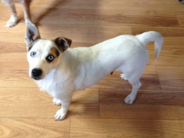 Tipper is a female, 20lb, terrier like dog.
