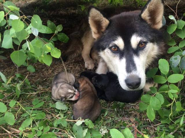 Eva is mother of the Night Litter.