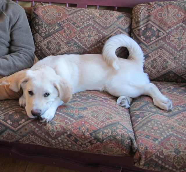 Pacha is a 6-month-old male puppy.