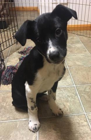 Pongo is a male Dalmatian / Husky Cross.