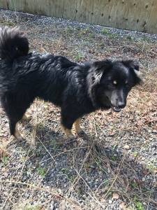 Leego is a young, male husky cross.
