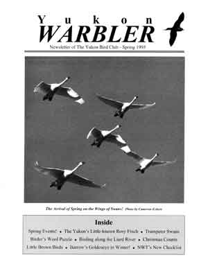 Yukon Warbler Spring 1995