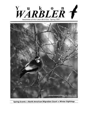 Yukon Warbler Spring 1997