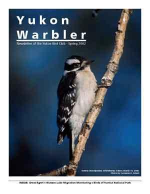 Yukon Warbler Spring 2002