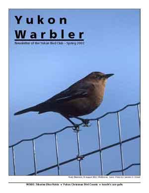 Yukon Warbler Spring 2003