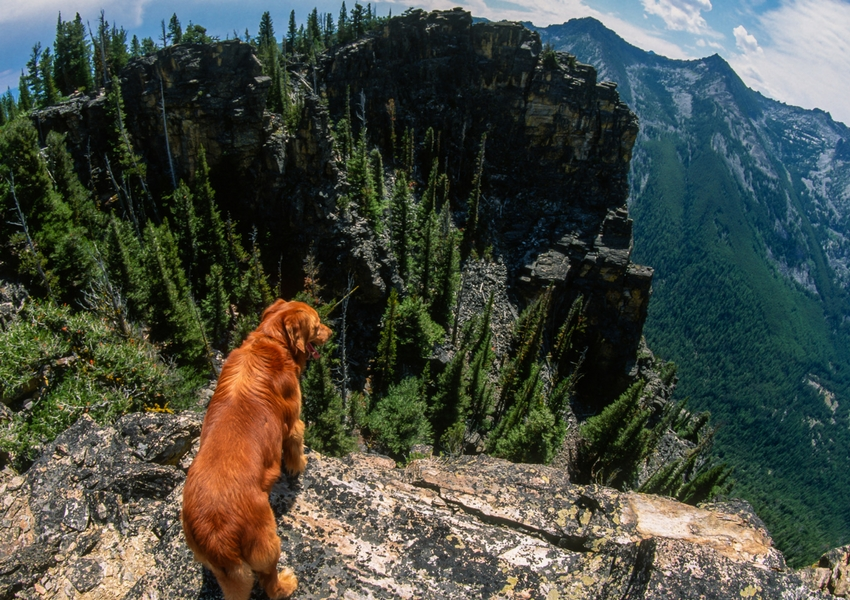 Tips for Hiking with Dogs-Yukon Charlie's