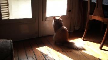 妹の猫「ぎんたん」が天に召されました。