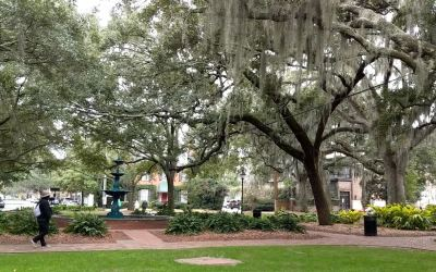 The Spanish Moss in Savannah and Charleston